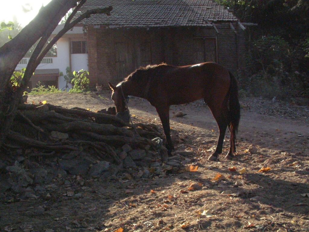 Tarapur, Maharashtra