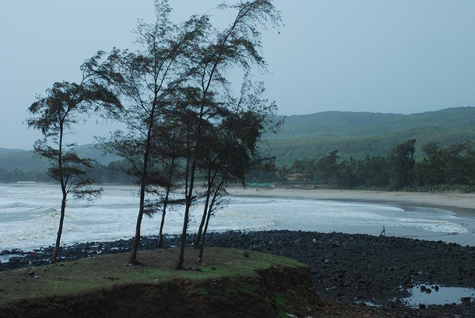 More suru trees