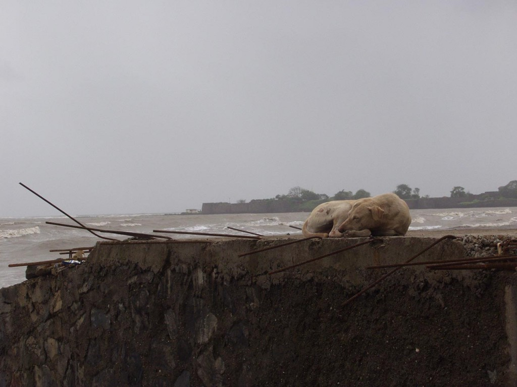 A dog sleeps peacefully at the beach