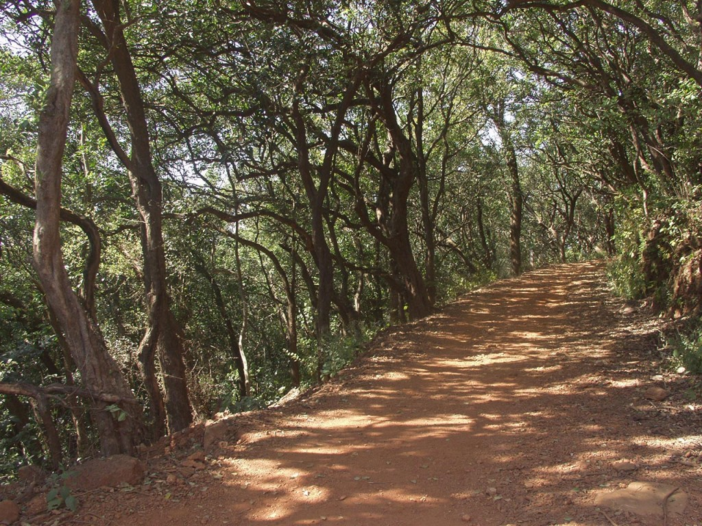 One of the many walking trails in the Jungle at Matheran