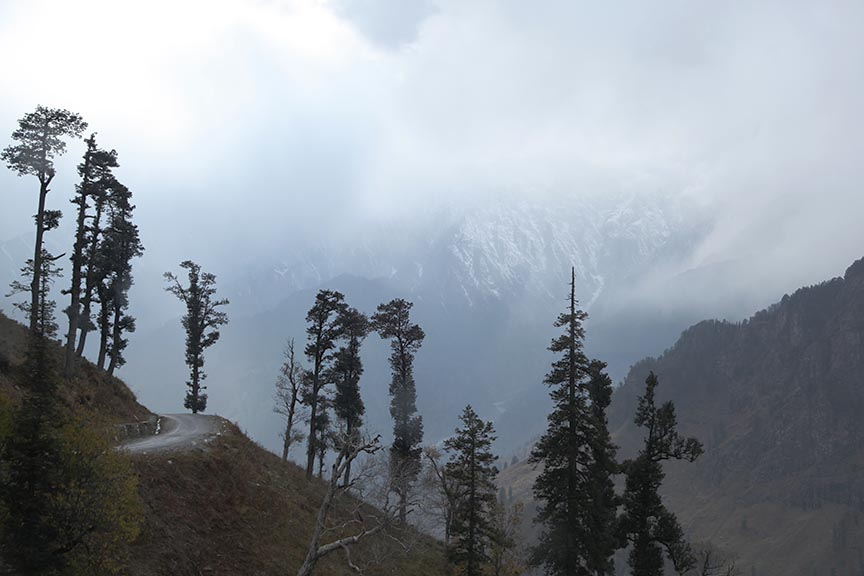 Chopped trees in Manali