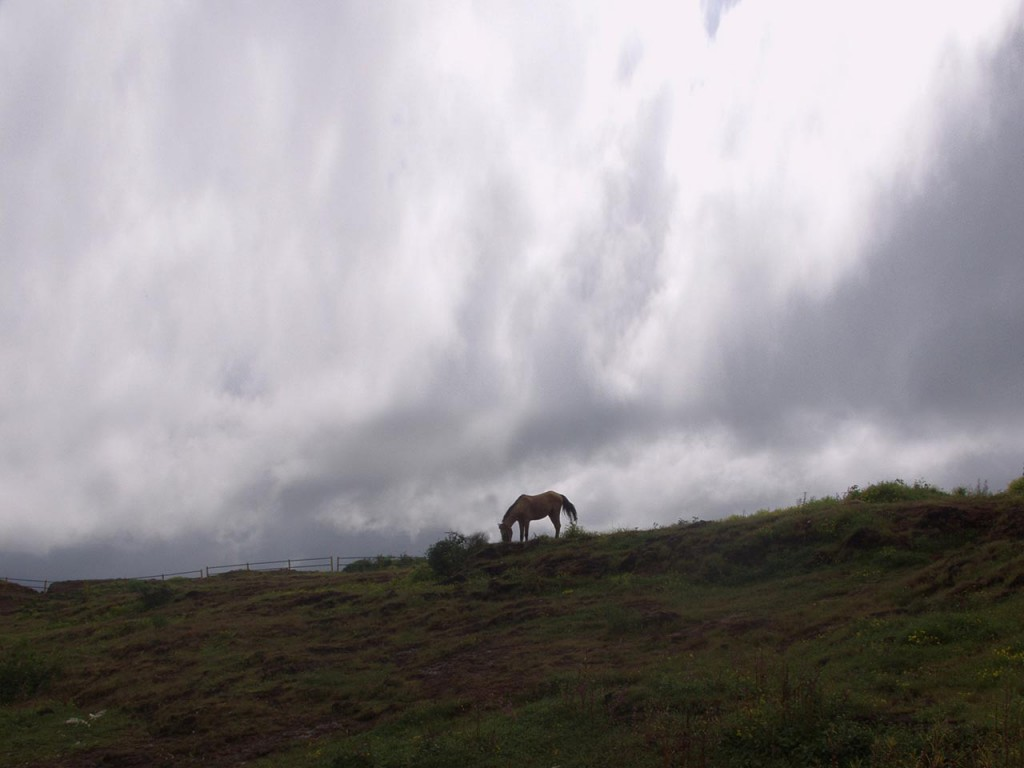 Horses are available for riding at the Table Top in Panchgani.