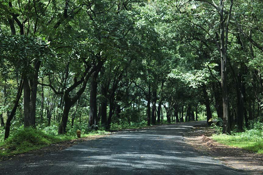 Lush green roads
