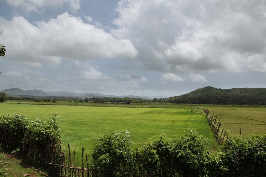 Paddy fields in Karnataka