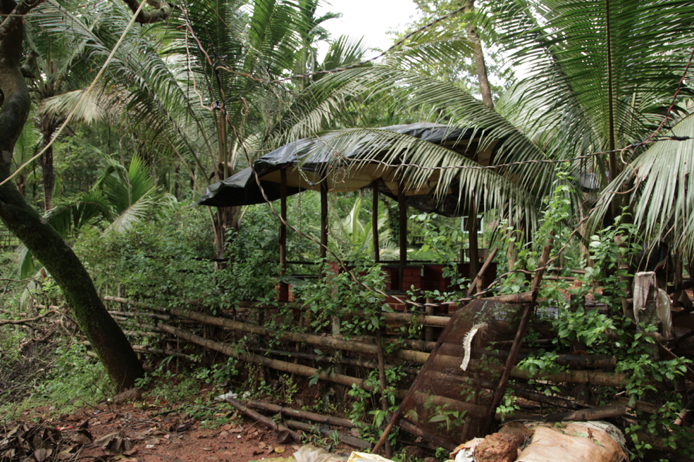 Shack in a coconut and betel nut plantation