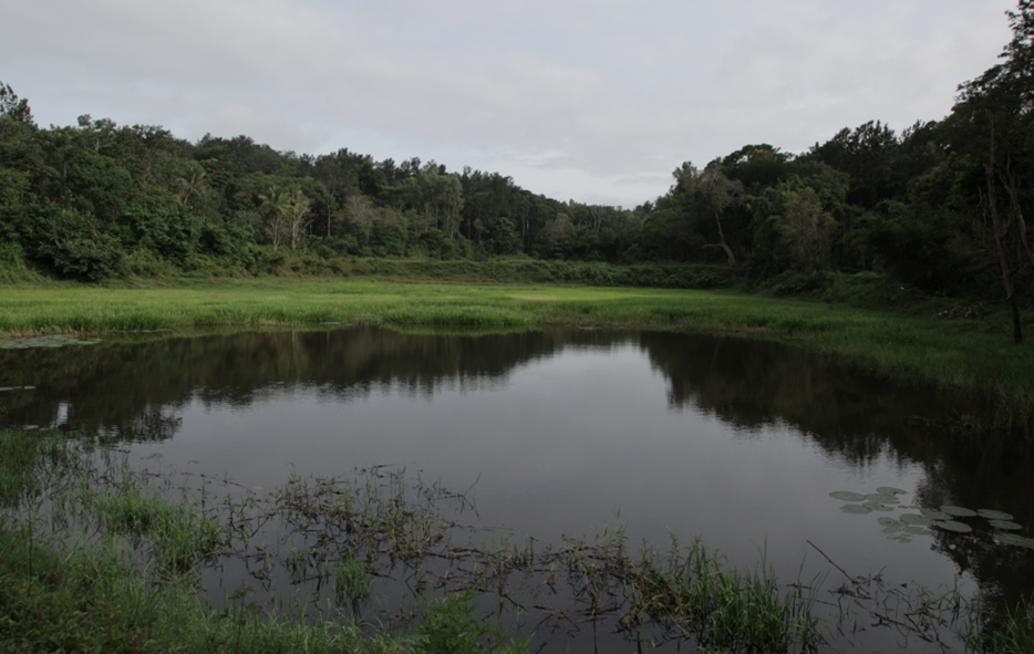 Water reservoir inside coffee estate in Coorg