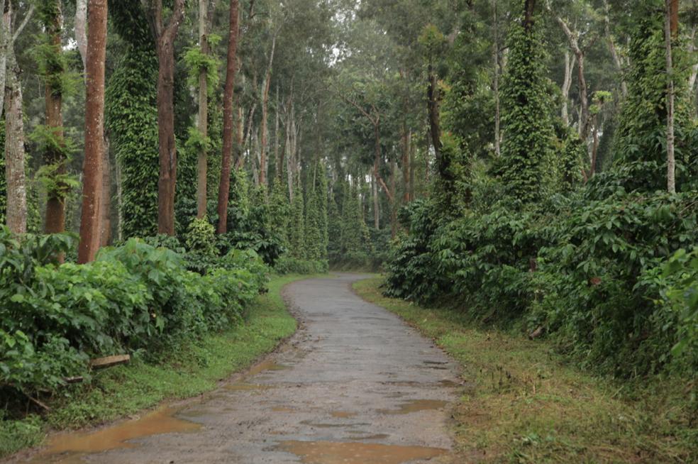 The plantation trails