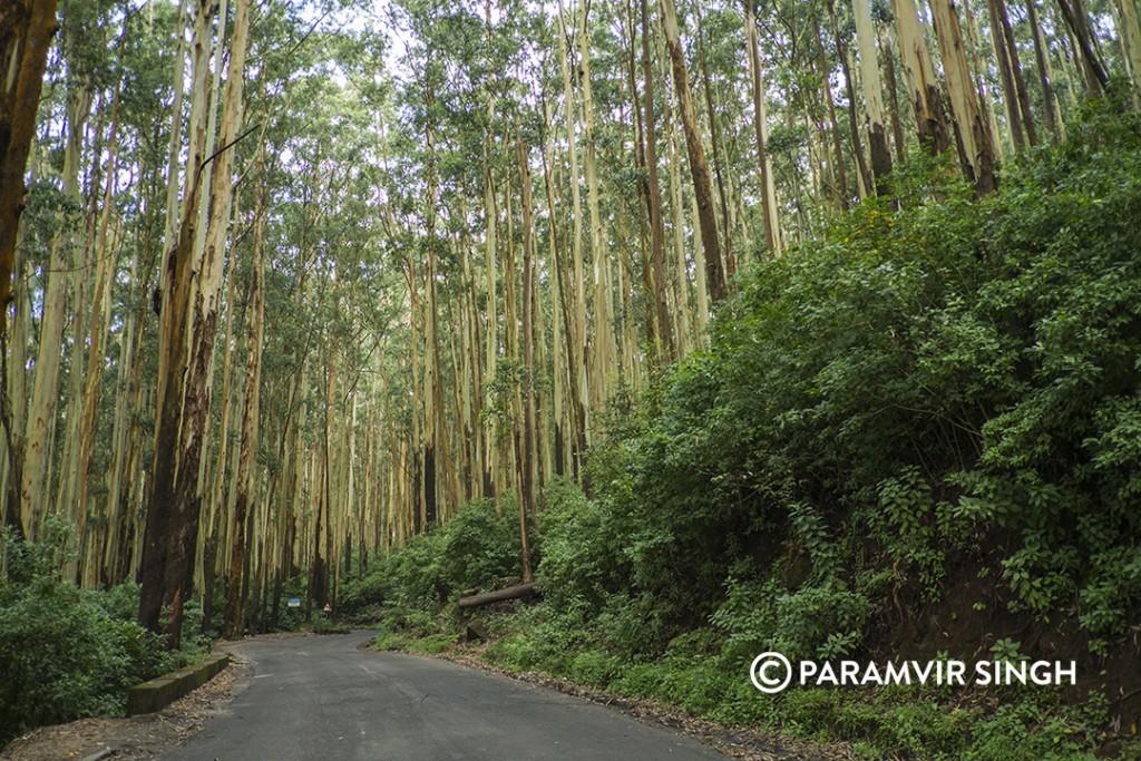 Kotagiri Drive