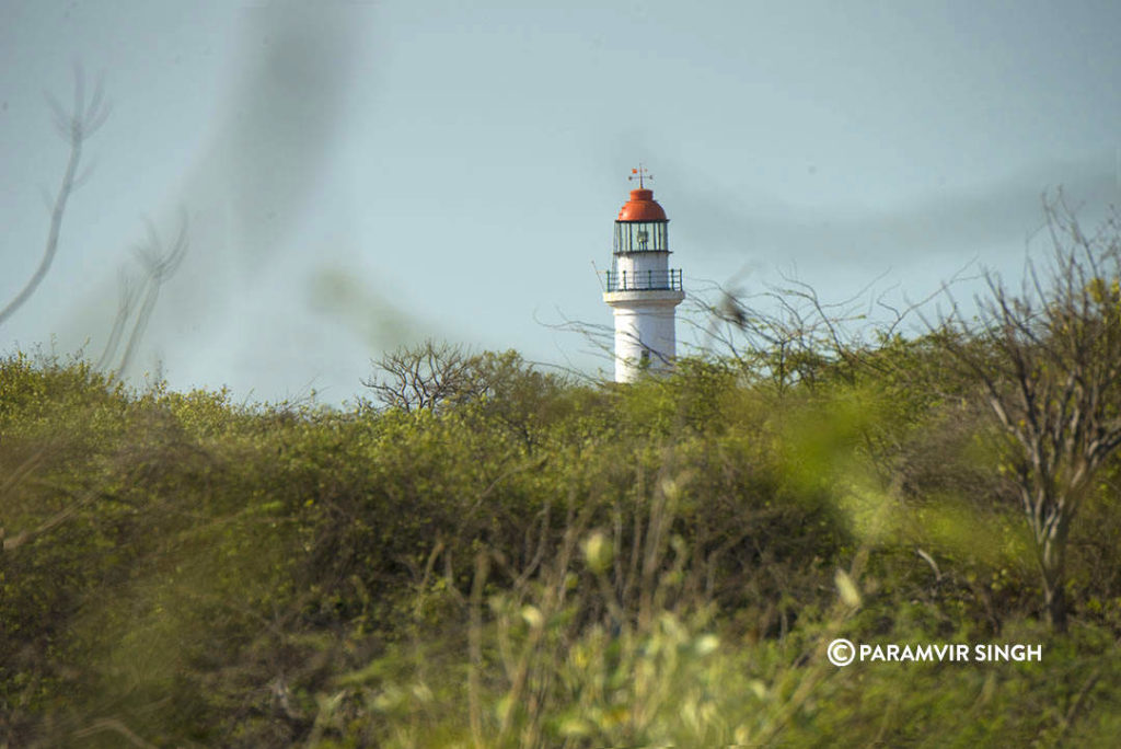LightHouse at Kodaikarai Wildlife Sanctuary