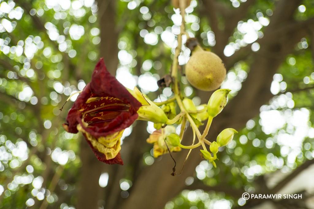 Flower in Pondicherry