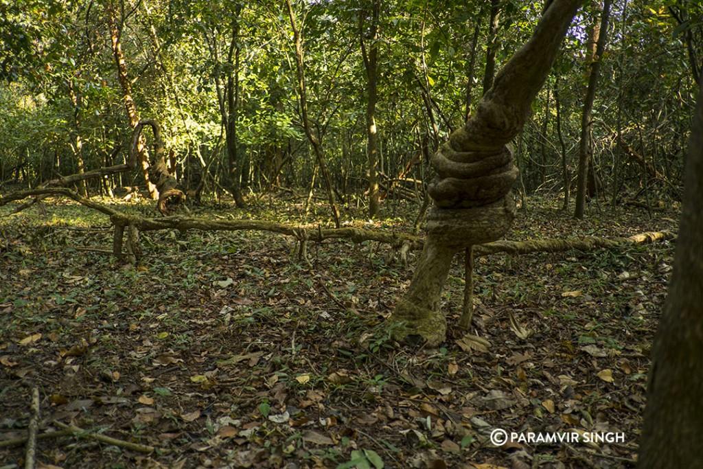 Cotigao forest floor.