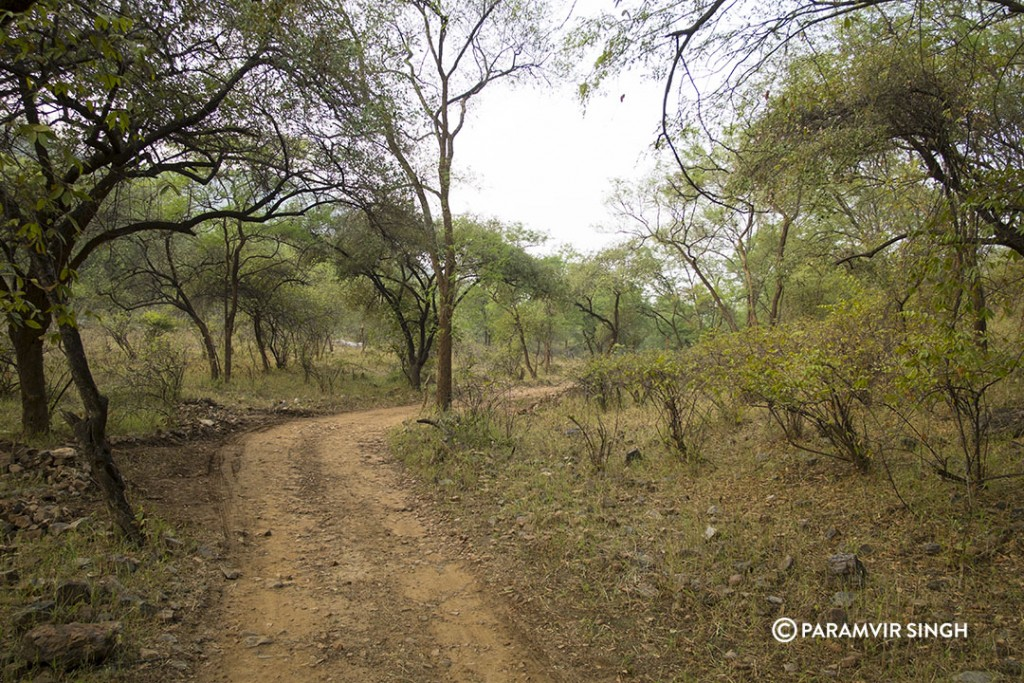 Sariska National Park.