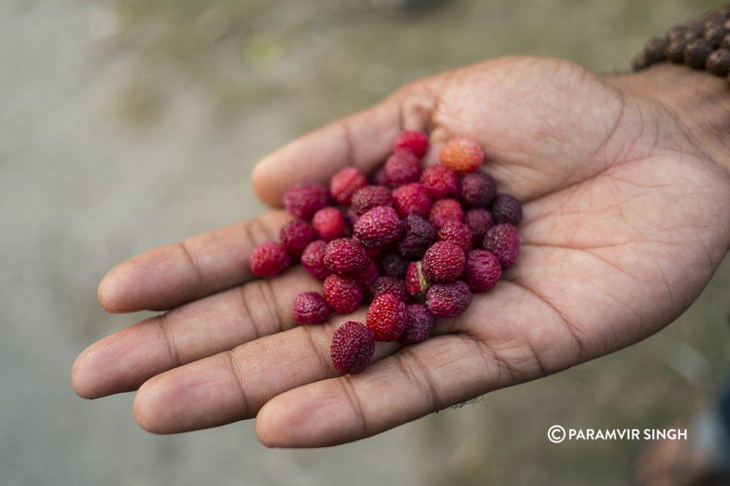Kaphal Berries.