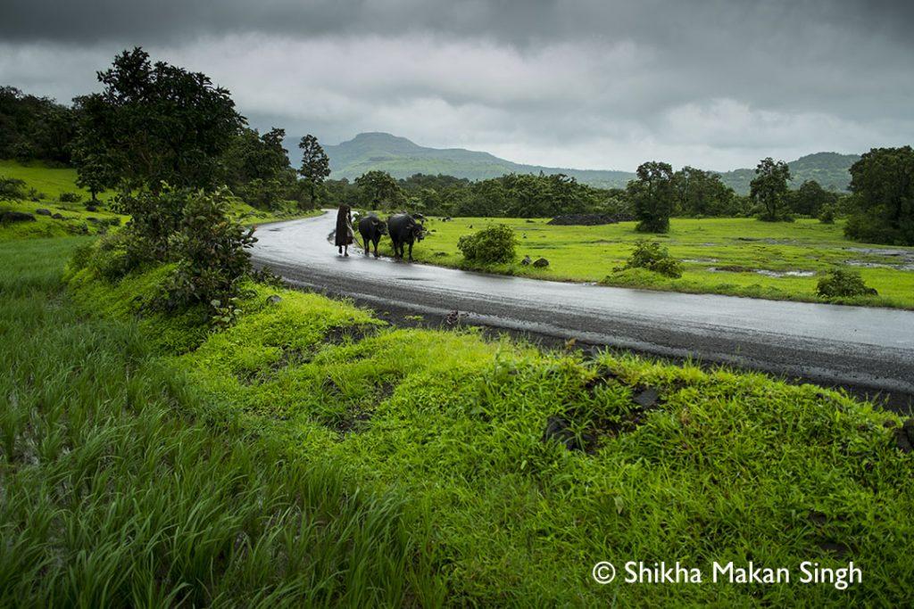 maharashtra_countryside