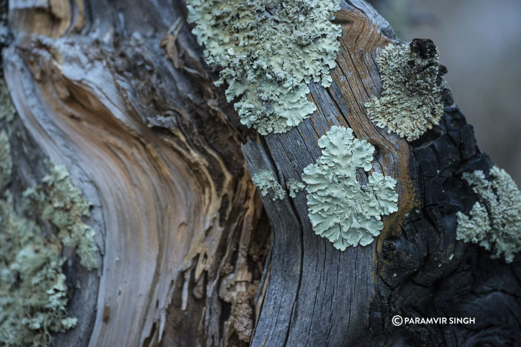 fungus in sangla valley