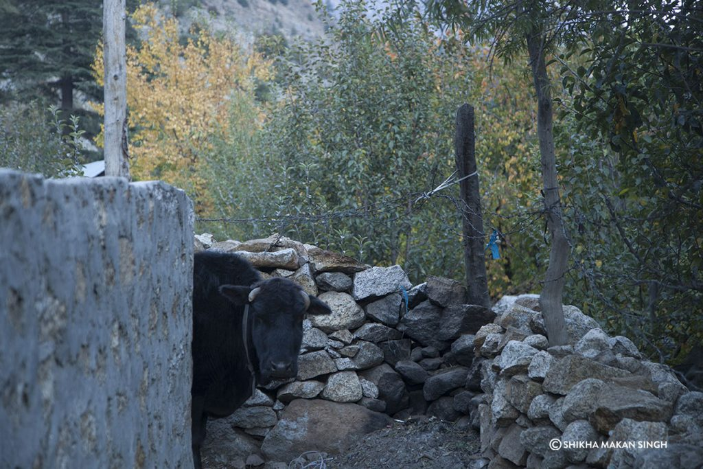 Sangla Valley village