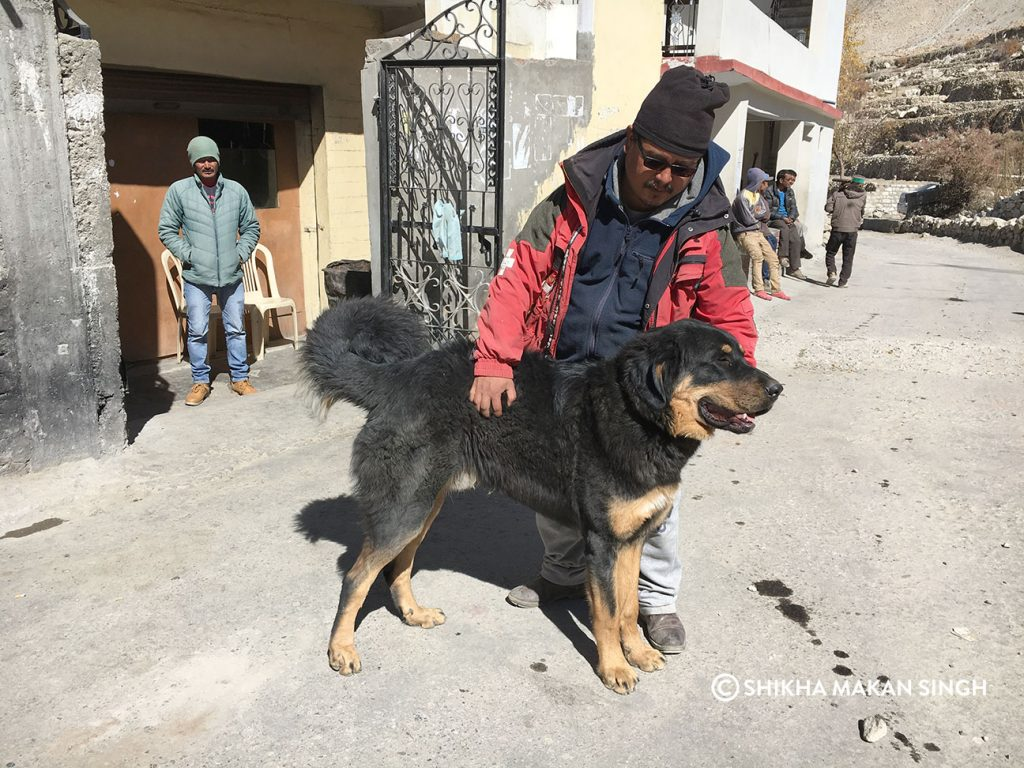 Shanta with his handsome Tibetan Mastiff