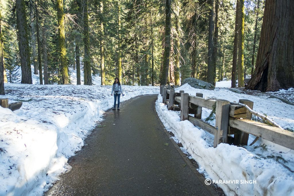 Sequoia National Park in snow.