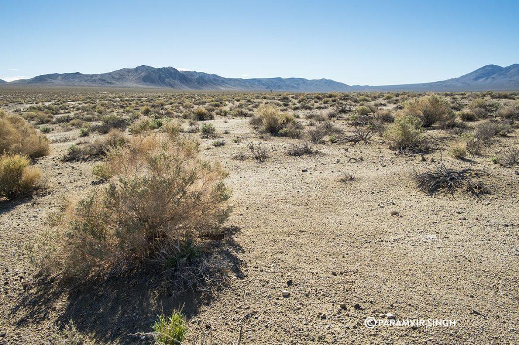 Desert shrubs in Death Valley National Park