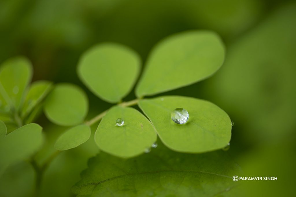 bead of water on a leaf at Tungareshwar Wildlife Sanctuary