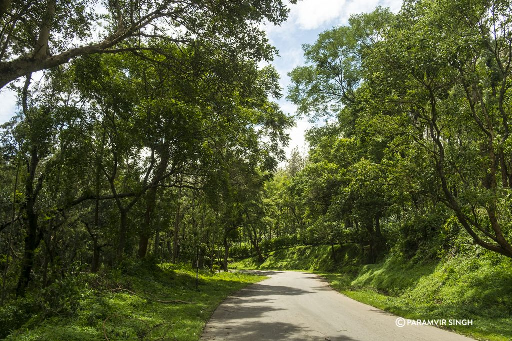 Winding roads of Chikmagalur