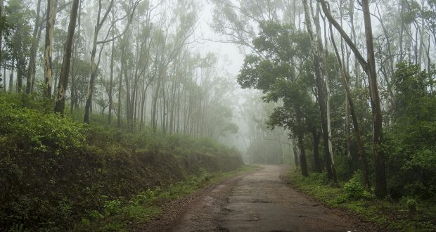 Misty trails in Chikmagalur