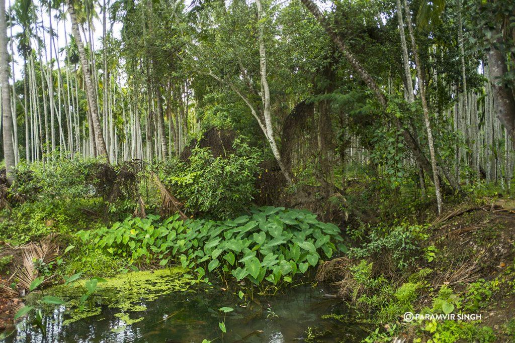 Pond in Chikmagalur estate