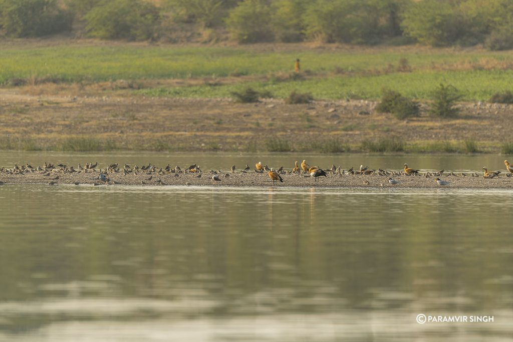 Chambal River Safari