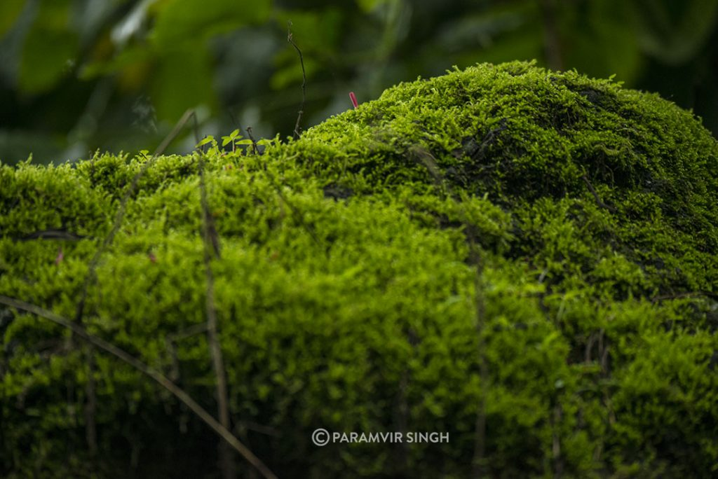 Moss in Chikmagalur