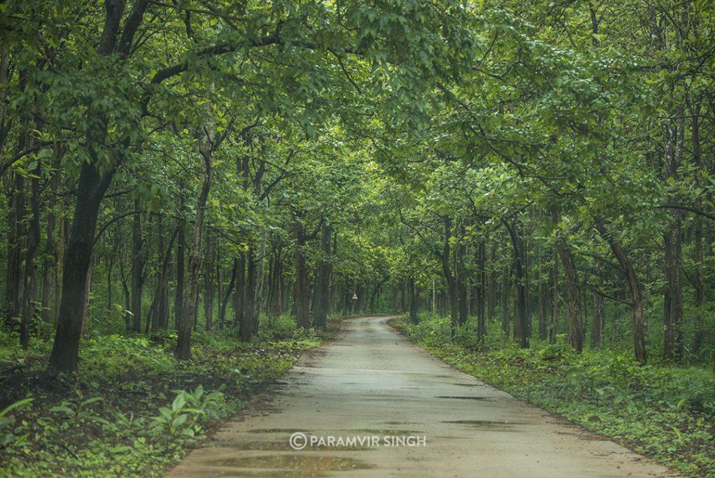 Chikmagalur Trails
