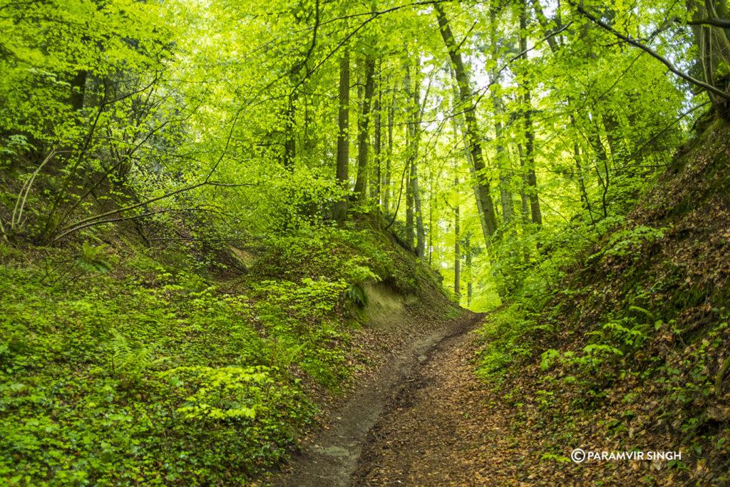 Safenwil Woods