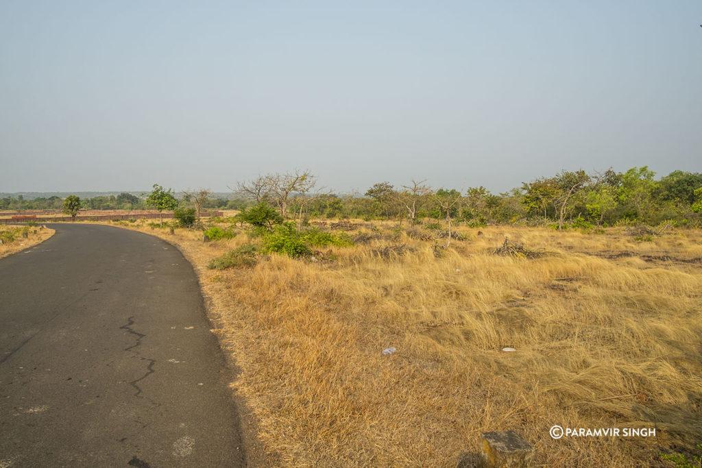 Grasslands in Ratnagiri
