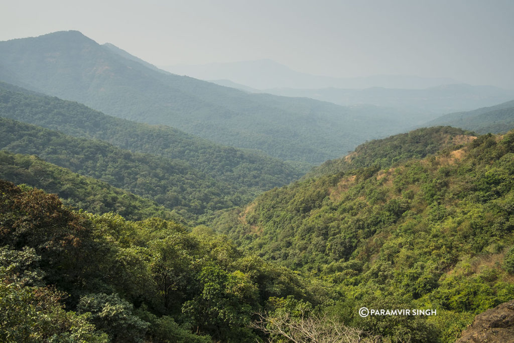 Wonderful forests near TRatnagiri