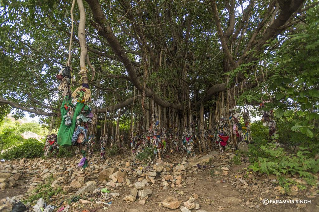 Wish Tree Banyan, Hampi