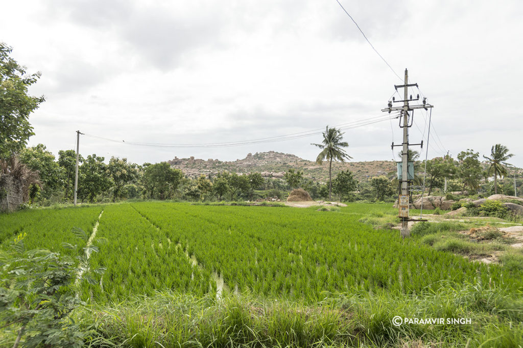 Hampi Paddy Fields