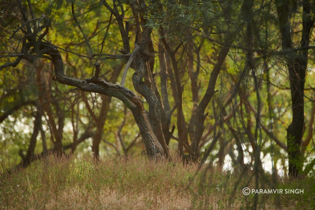 Jhalana Leopard Reserve