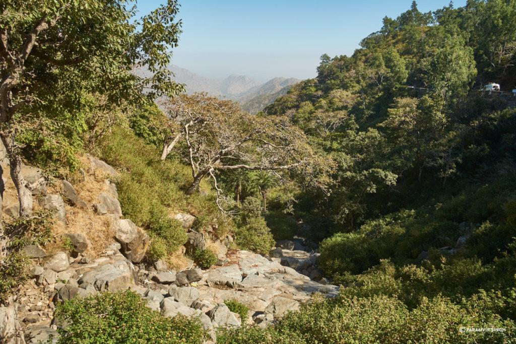 Mount Aby Wildlife Sanctuary